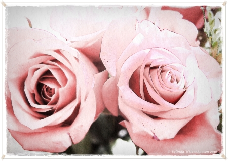 RosesWatercolour