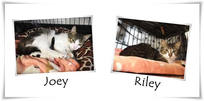 Joey & Riley Banner