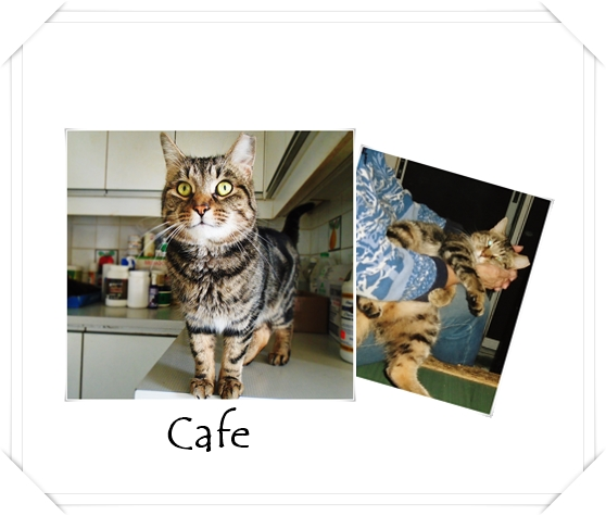 Cafe Feb 21 2020