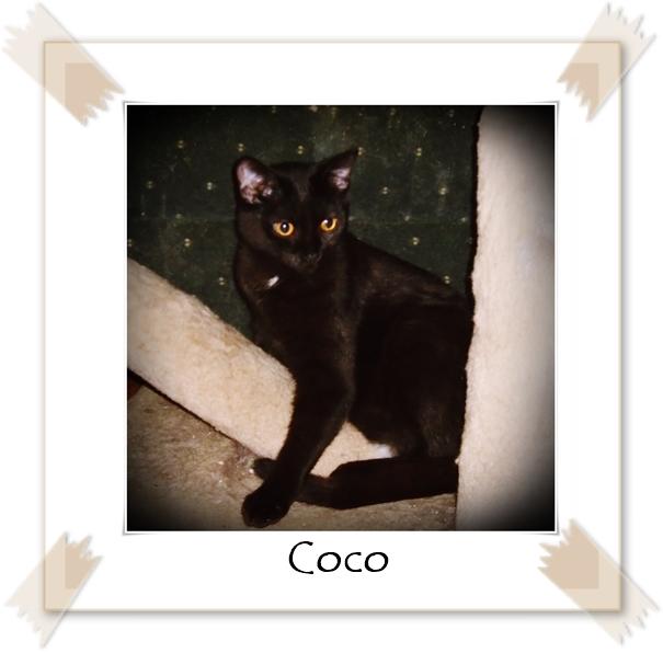 Coco Feb 8 2020