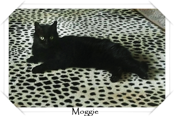 Moggie