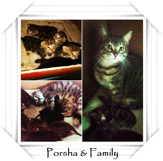 Porsha and kittens